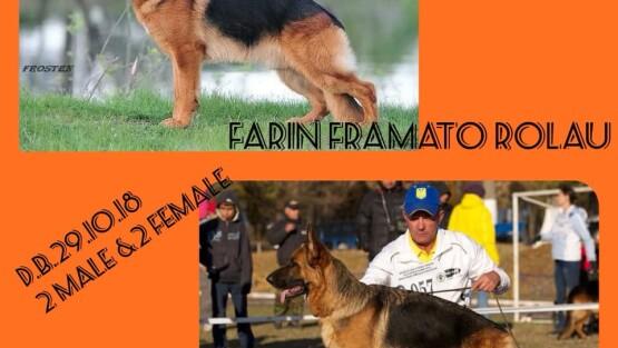 В питомнике щенки от вязки f.FARIN FRAMATO ROLAU & m.ESPADA NORD SHTORM