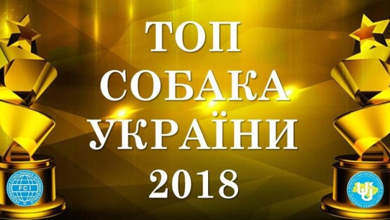 ТОП СОБАКА УКРАЇНИ 2018